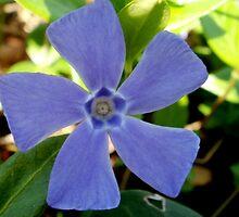 Flower Windmill - Altamont Gardens Co. Carlow by cmwild31