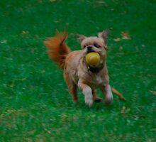 Run Biddy Run by vigor