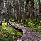 Walk in the Woods by Sue  Cullumber