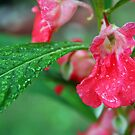 After the Rain by Susan Blevins