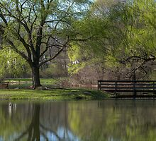 Willows Park In Spring by Don Schroder