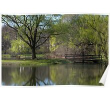 Willows Park In Spring Poster