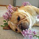 French Bulldog  by Cody  VanDyke