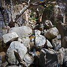 Ortega Creek Rocks by Mark Ramstead
