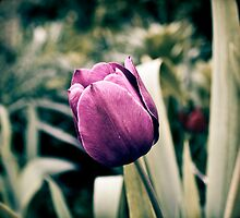 Purple Passion by Marisa Taylor