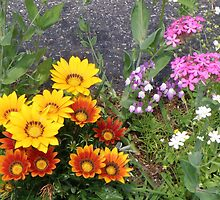 rainbow of flowers by deltadawn