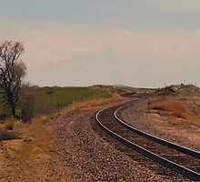 Tracks  by Barb Miller