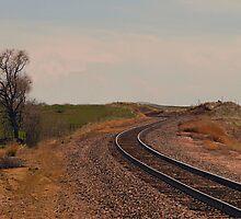 Tracks  by Barb Miller
