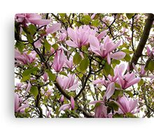Magnolia (Tulip Tree) Canvas Print