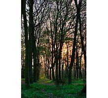 Chalet Wood Photographic Print