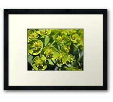 Lime Jello Plant Framed Print