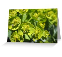 Lime Jello Plant Greeting Card