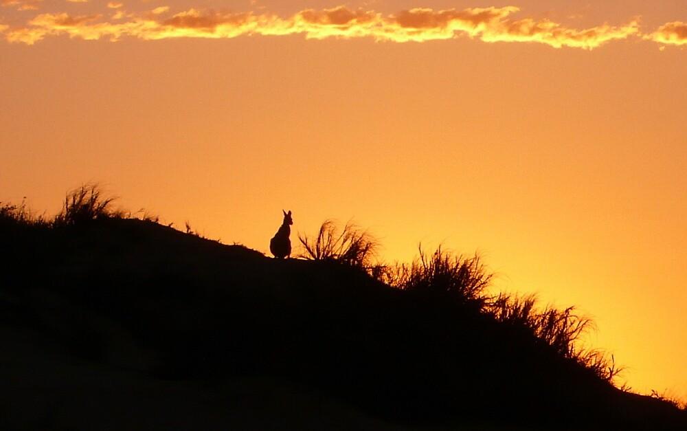 kangaroos enjoy sunsets too by garyi