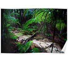 Wangoollba Creek - Fraser Island Poster