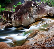 Murray River Falls National Park; North Queensland by Ian Beattie