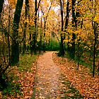 Pathways - Autumn Rain at 1,000 Islands by shutterbugg73