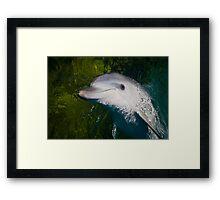 Playful Dolphin Framed Print