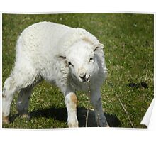 Who ewe looking at ?! Poster