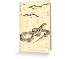 The Reptiles of British India by Albert C L G Gunther 1864 0523 Snakes Greeting Card