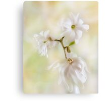Nice In White Satin Canvas Print