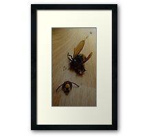 Terrible Hornet Crash Framed Print