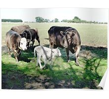 Friends come to say Moo to Casper Poster