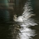 Swan Glide. by Youcrazything