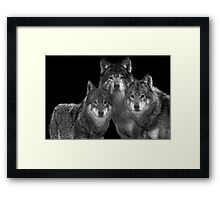 Sheep in wolf clothes  Framed Print