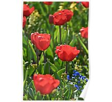 Gang of Red Tulips Poster