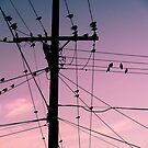 Powerline Birds by Elizarose