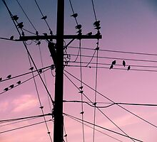 Powerline Birds by Elizarose