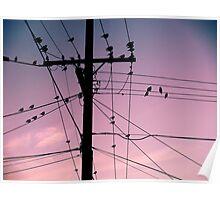 Powerline Birds Poster