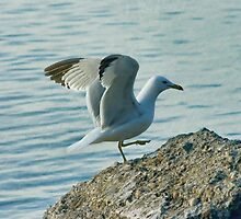 Seagull dance by Michelle Anderson