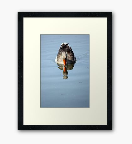 Just reflecting  Framed Print