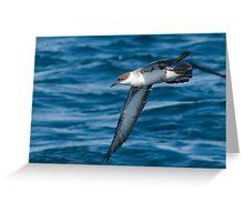 Great shearwater (Puffinus gravis) Greeting Card