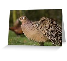 Female Pheasant Strethching her wing. Greeting Card