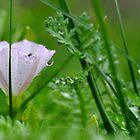 After the rain by Denitsa Dabizheva