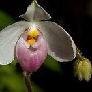 Orchid Lady With a Purse by ElyseFradkin