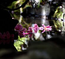 Magnolia petals in the water by Joy Leong-Danen