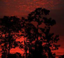 Red Dawn by kathy s gillentine