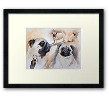 Pug shots Framed Print