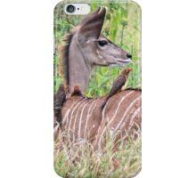 Kudu calf iPhone Case/Skin