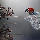 Ladybirds  by Ellen van Deelen