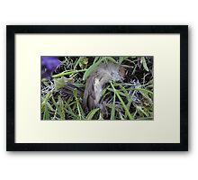 Dead bird in lavender. Framed Print