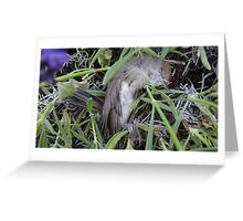 Dead bird in lavender. Greeting Card