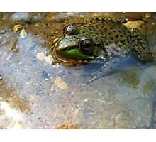 The Frog Without His Princess Photographic Print