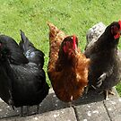 Hen Party by sarnia2