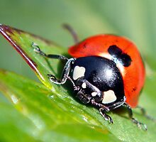 Lady Bug by JRCharlton