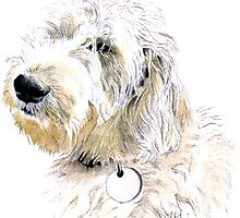 Labradoodle Butters by Yvonne Carter
