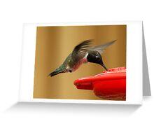 Plano Hummingbird Greeting Card